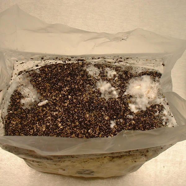 mushroom grow bag instructions