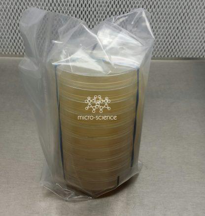 Petri dishes agar