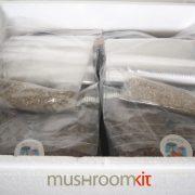 Incubator MycoFarm